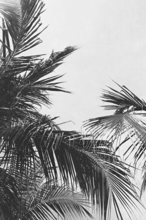 Palmipuud mustvalged