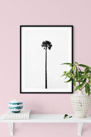 Pikk palm