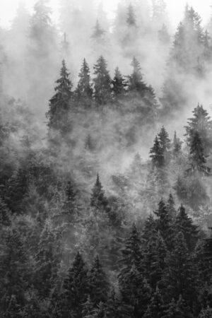 Udune mets